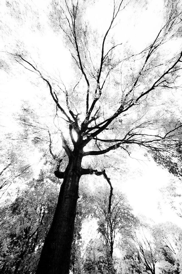 Broke Oak