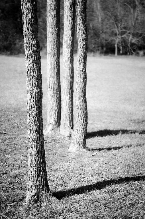Four Trees