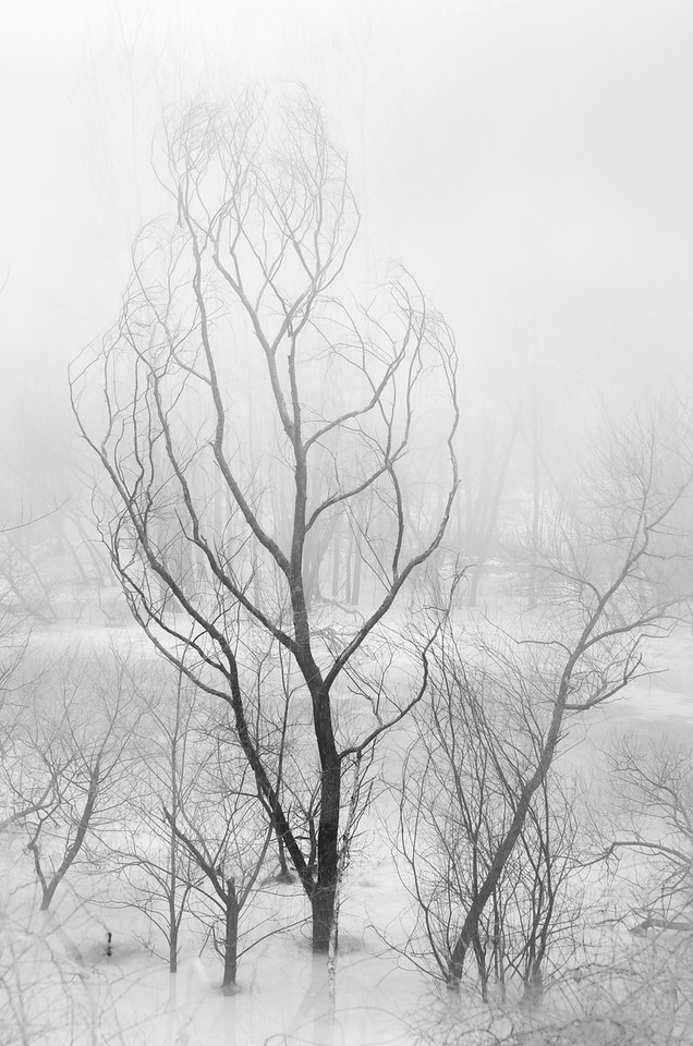 Trees In Ice