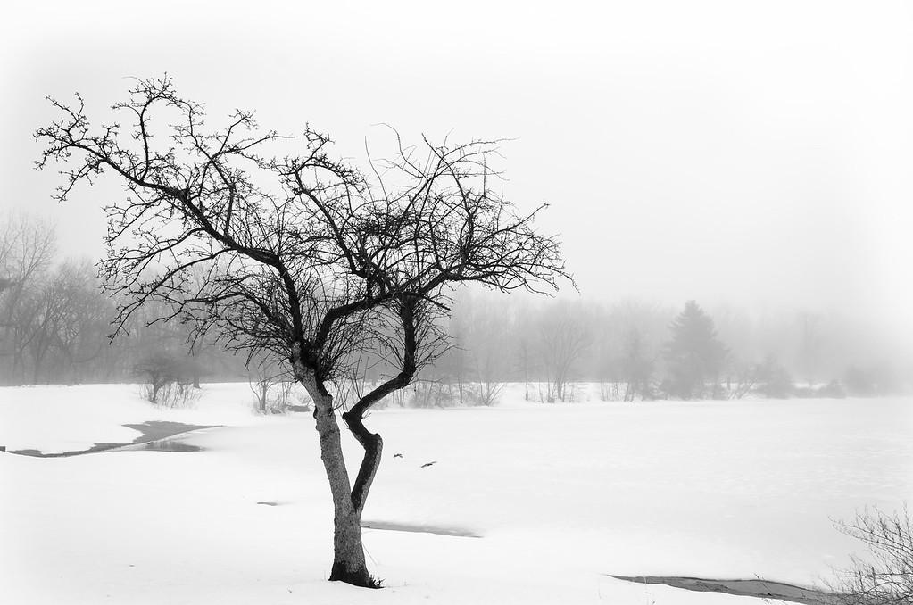 Tree At Winter Duck Pond