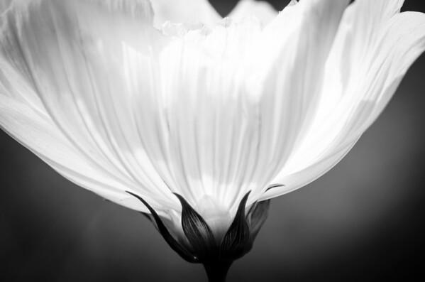 Under White Cosmos