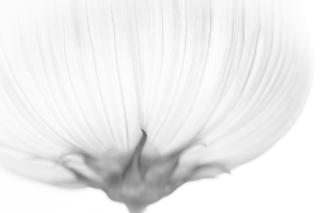 White Bowl Flower