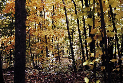 I am pretty sure this picture and the next 2 were taken in the Pigeon River State Forest.  Tom used to love going there in the fall, and it was truly very beautiful there.