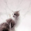 "Probably just an accidental over-exposure, but I prefer to think of it as artistic.  I call this picture ""Snow Cat."""