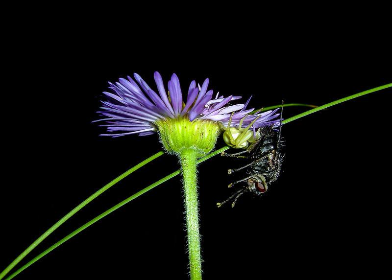 Fly Meet Spider (Arizona)