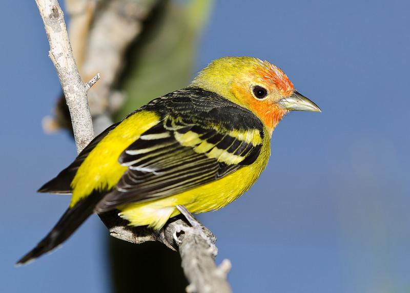Bird On A Wire (Arizona)