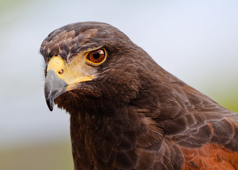 Eagle Eye (Arizona)