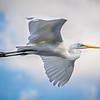 Gliding Crane (Florida)