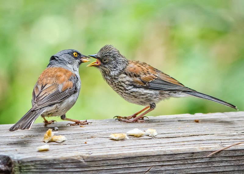 Beak To Beak (Arizona)
