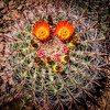Smiling Cactus (Arizona)