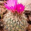 Springtime Cactus (Arizona)