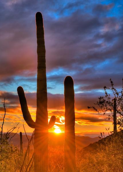 Cactus Buddies (Arizona)
