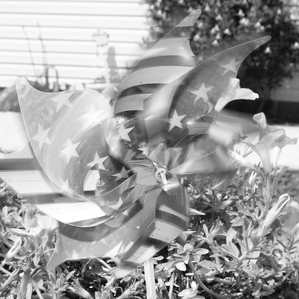 Pinwheel ~ garden