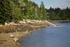 Acadia 6