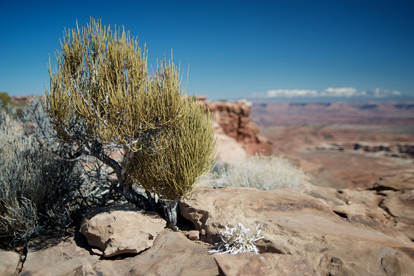 Utah- Canyonlands National Park