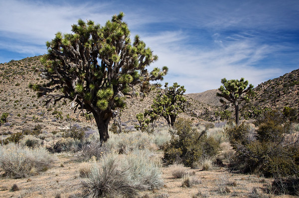 California- Joshua Tree National Park