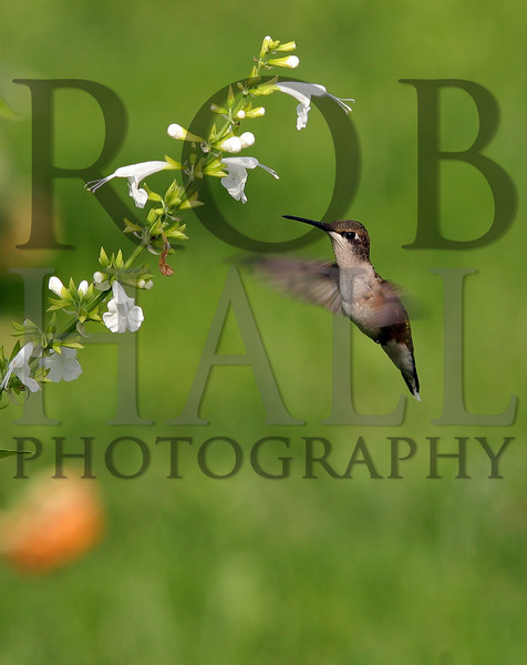 """Rob Hall Photos-""""Jackson"""" Collection"""