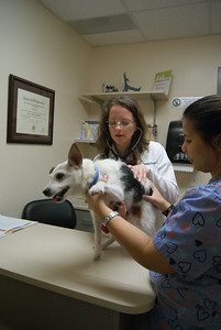 Dr. Michelle Droke (left), a veterinarian at Cole Park Veterinary Hospital, gives Flashpoint Henry Percy a checkup with the help of Serena Kerney (right). Dr. Droke graduated with a degree in veterinary medicine from Texas A & M in 2000. She has been with Cole Park for 11 years.