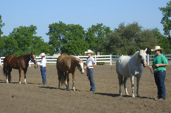 Members of 4-H line up with their horses to wait as a judge inspects each animal. A lot of work is expected out of the young members, from training with their horse to keeping them properly groomed.