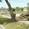 One of Ottumwa's most photographed trees, across from First Lutheran Church in Ottumwa, was downed during the storm. Before Monday afternoon, it was hauled away. <br /> Mark