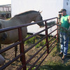 Jesse Hinebaugh feeds his horses hay Thursday at his family's Wapello County home. The drought has pushed prices way up; last year he paid $4 for a square bale, and this year, he's heard of horse owners paying $10.<br /> Mark