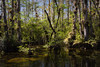 Deep in the Everglades