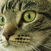 Jack - one of the most amazing cats I have met!  Street smarts kept him alive for 4months - and his 4 polydactylic feet.