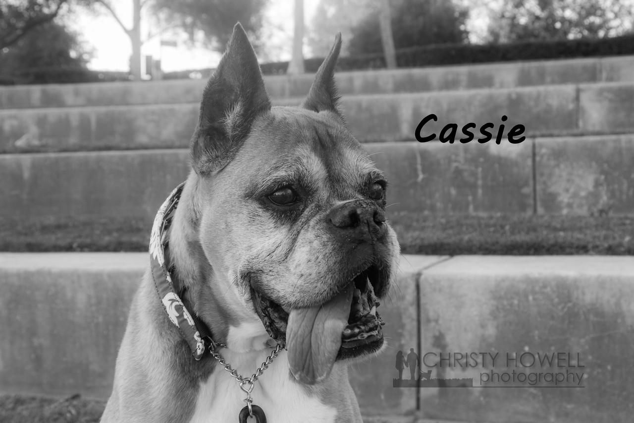 Cassie-12wm