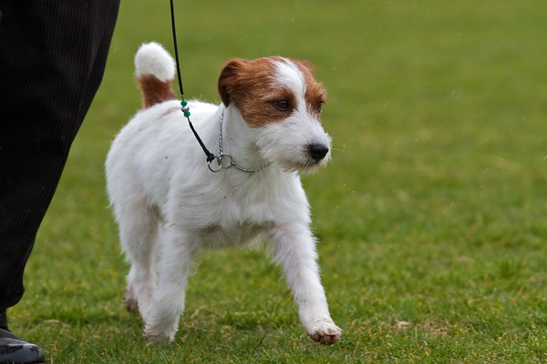 .Other JRT