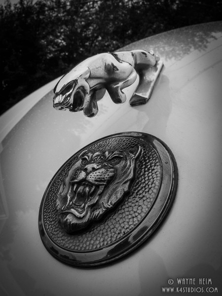 Jaguar Hood Ornament    Black and White Photography by Wayne Heim