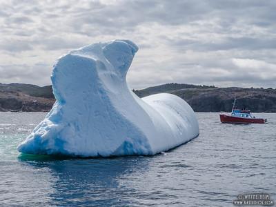 Iceberg 35    Photography by Wayne Heim