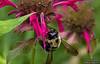Gathering Honey- Photography by Wayne Heim