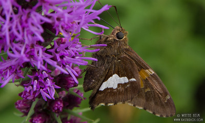 Moth on Flower   Photography by Wayne Heim