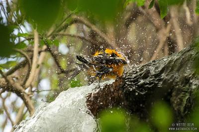 Taking a Bath   Photography by Wayne Heim