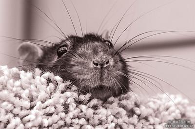 Peek a Boo    Photography by Wayne Heim