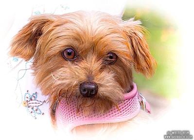 Adorable Pet  - Photography by Wayne Heim