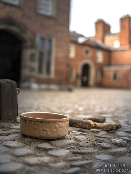 Dog Bowl     Photography by Wayne Heim