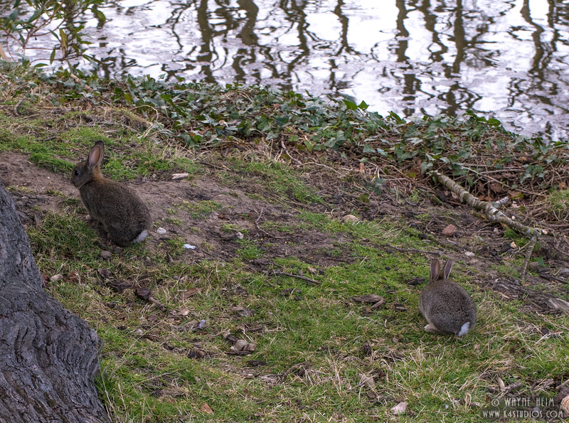Cottontails      Photography by Wayne Heim