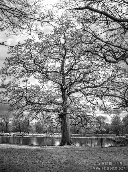 Family Tree     Black & White Photography by Wayne Heim