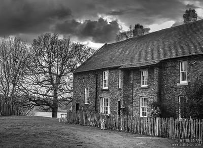 Morning Visitors     Black & White Photography by Wayne Heim