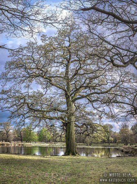 Family Tree      Photography by Wayne Heim