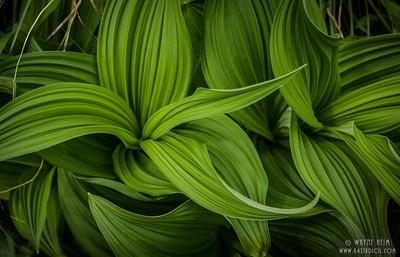 Green Texture   Photography by Wayne Heim