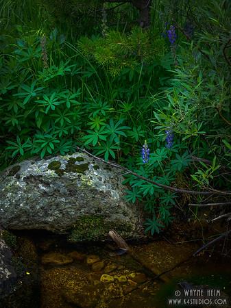 Hint of Purple  Photography by Wayne Heim