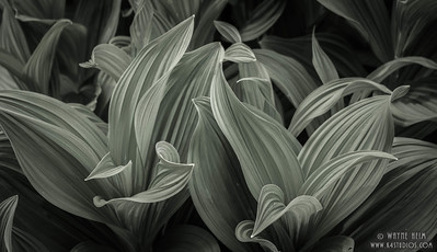 Texture -- Black & White Photography by Wayne Heim