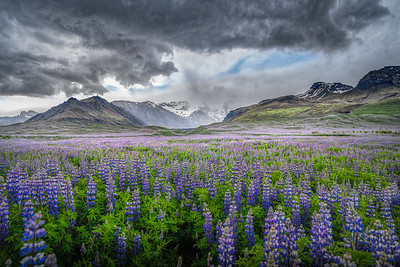 Flowers and Mountains    Photography by Wayne Heim