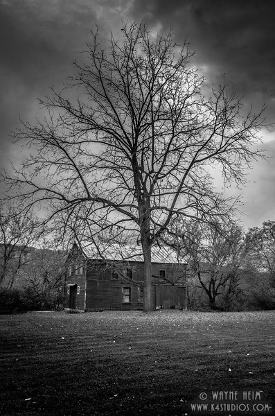 Guardian Tree    Photography by Wayne Heim