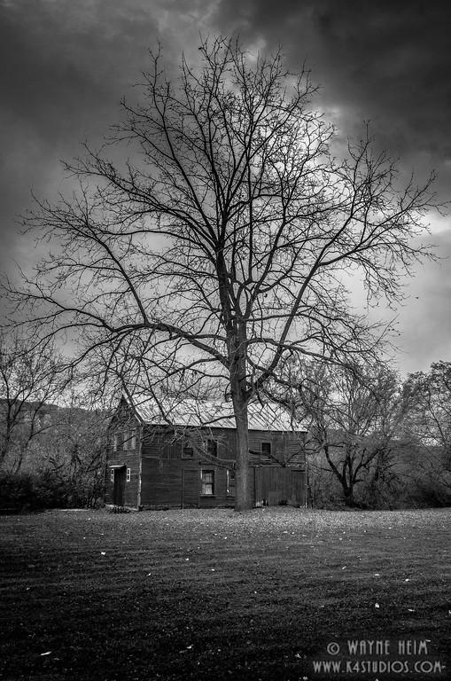 Guardian Tree    Photography by Wayne Heim
