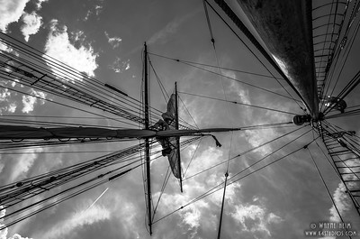 Looking Up    Photography by Wayne Heim