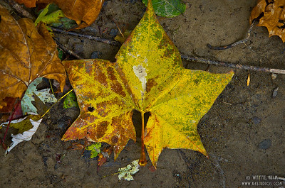 Yellow Leaf    Photography by Wayne Heim