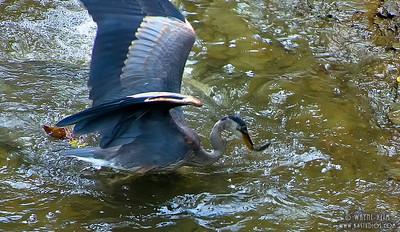 Fishing   Photography by Wayne Heim